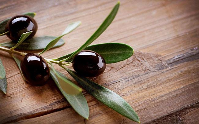 Oliven, Elexier des Lebens