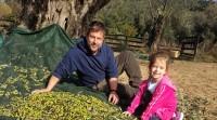 Grünes Gold - Olivenernte in der Toskana